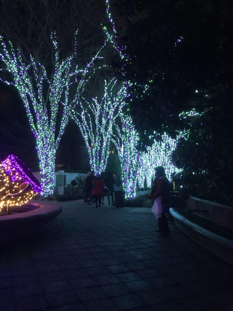 Botanical Garden Lights-1